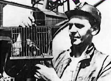 canary-coal-mine